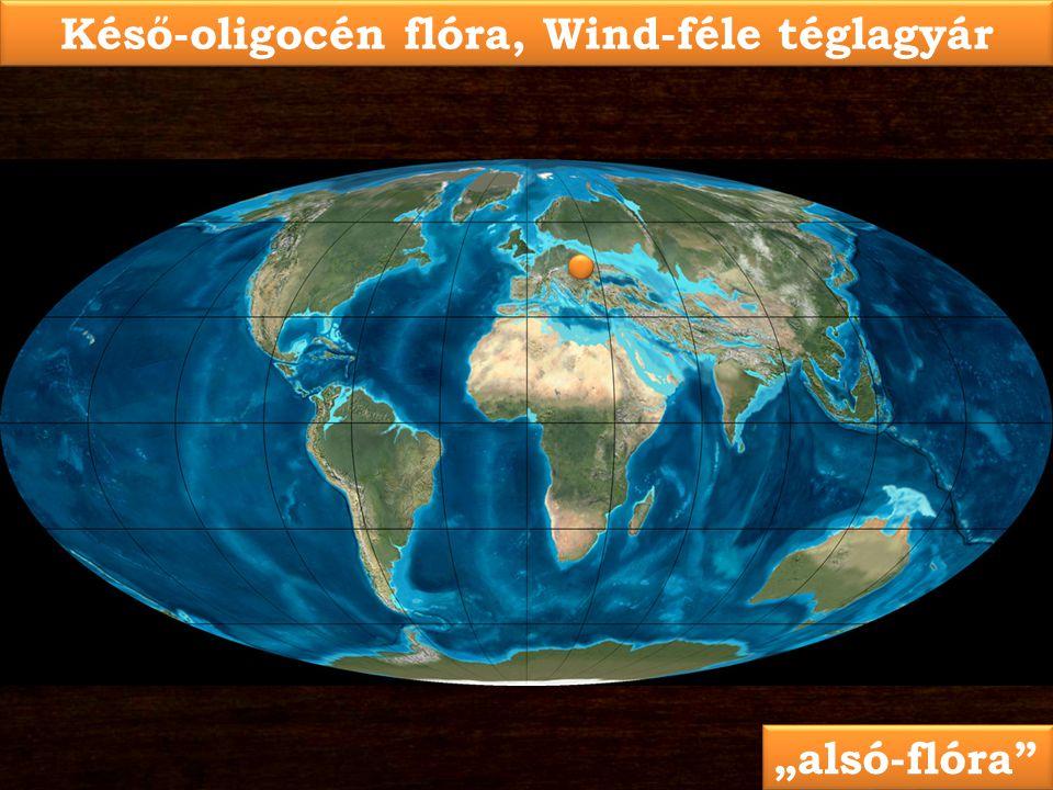 """Késő-oligocén flóra, Wind-féle téglagyár """"alsó-flóra"""""""