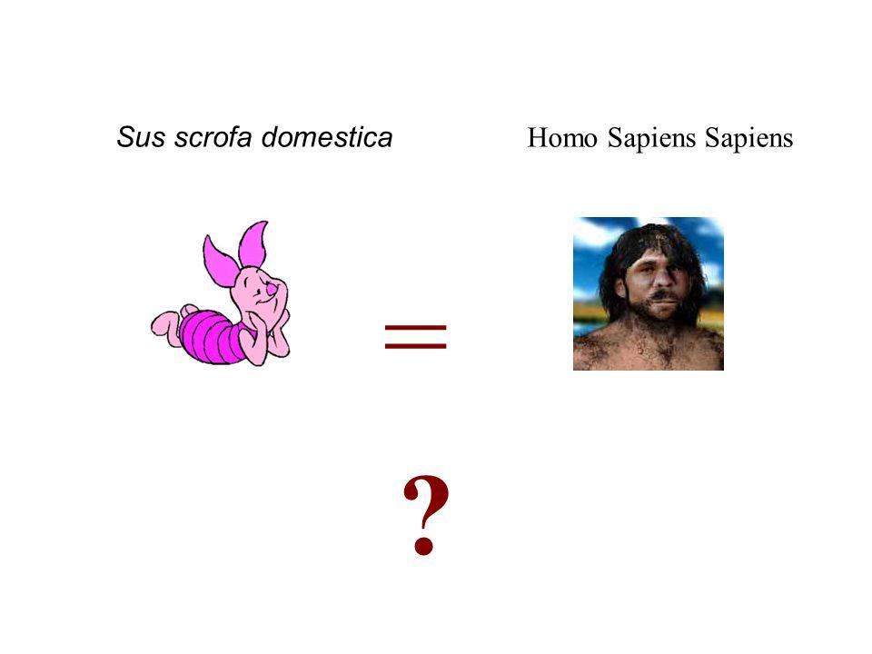 = Homo Sapiens Sapiens Sus scrofa domestica