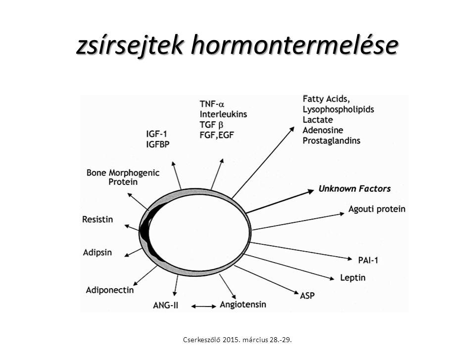 zsírsejtek hormontermelése Cserkeszőlő 2015. március 28.-29.