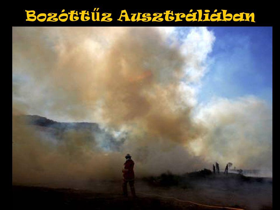 Bozótt ű z Ausztráliában