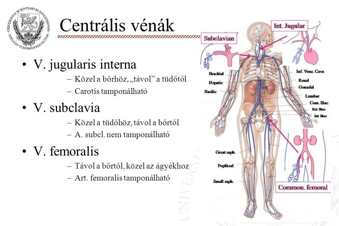 """V. jugularis interna –Közel a bőrhöz, """"távol"""" a tüdőtől –Carotis tamponálható V. subclavia –Közel a tüdőhöz, távol a bőrtől –A. subcl. nem tamponálhat"""