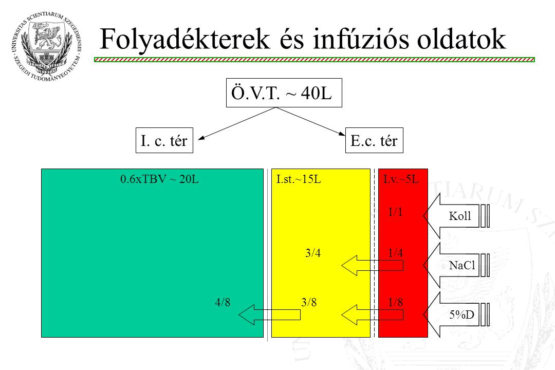 Folyadékeloszlás: Víz (5%D) az ÖVT-ben oszlik el (1/8) Na + az e.c.