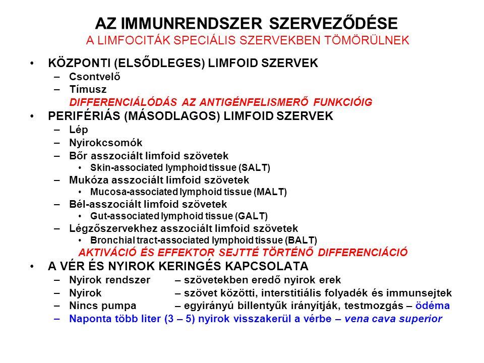 PERIÉRIÁS NYIROKSZERVEK Lép Nyirokcsomók Epitél sejtekhez kapcsolt limfoid szövetek Bőr asszociált limfoid szövetek Skin-associated lymphoid tissue (SALT) Mukóza asszociált limfoid szövetek Mucosa-associated lymphoid tissue (MALT) Bél-asszociált limfoid szövetek Gut-associated lymphoid tissue (GALT) Légzőszervekhez asszociált limfoid szövetek Bronchial tract-associated lymphoid tissue(BALT)