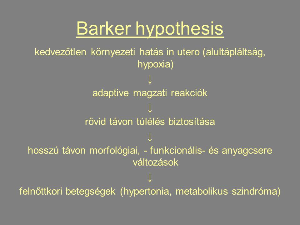 Barker hypothesis kedvezőtlen környezeti hatás in utero (alultápláltság, hypoxia) ↓ adaptive magzati reakciók ↓ rövid távon túlélés biztosítása ↓ hosszú távon morfológiai, - funkcionális- és anyagcsere változások ↓ felnőttkori betegségek (hypertonia, metabolikus szindróma)