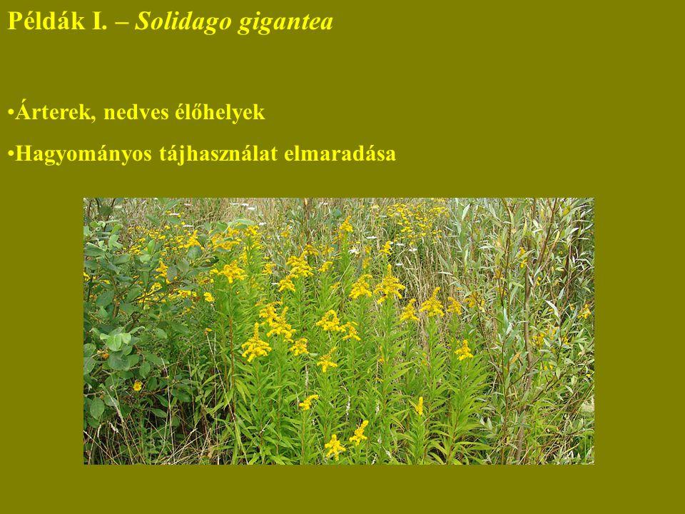 Példák I. – Solidago gigantea Árterek, nedves élőhelyek Hagyományos tájhasználat elmaradása