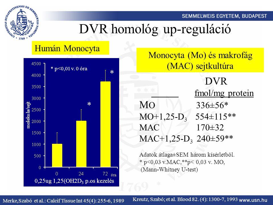 DVR fmol/mg protein M O 336±56* MO+1,25-D 3 554±115** MAC 170±32 MAC+1,25-D 3 240±59** Adatok átlaga±SEM három kísérletből. * p<0,03 v.MAC,**p< 0,03 v
