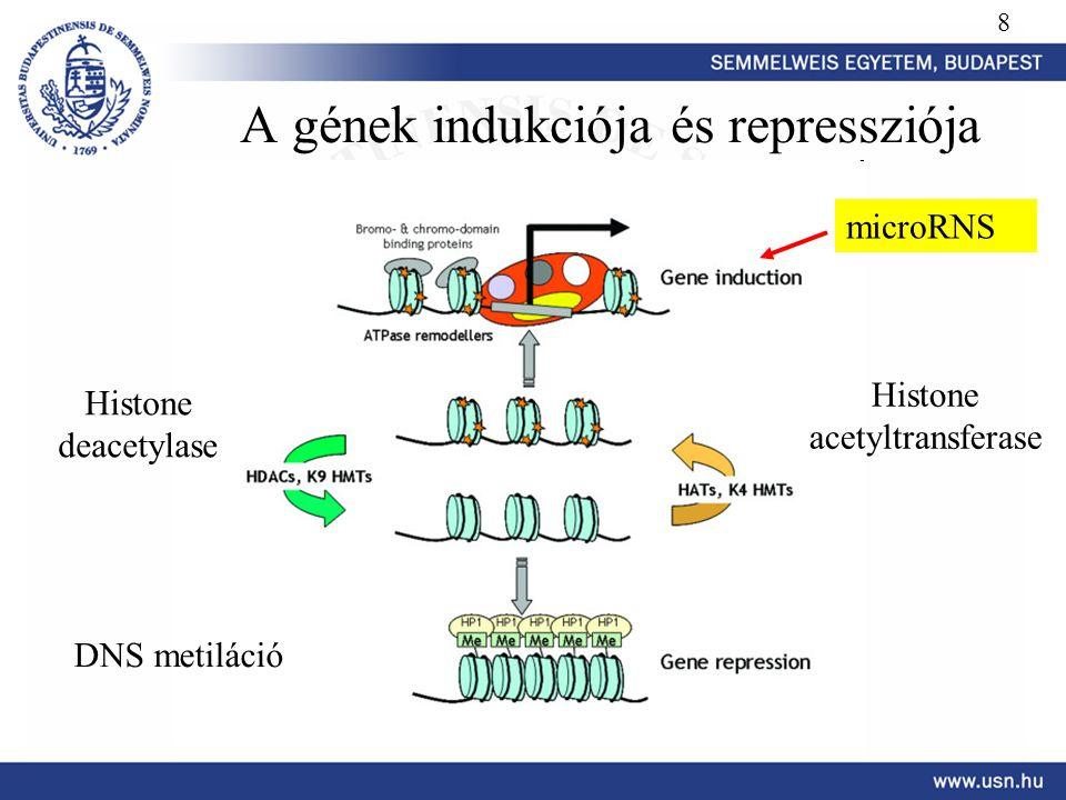 A gének indukciója és repressziója Histone deacetylase Histone acetyltransferase DNS metiláció 8 microRNS