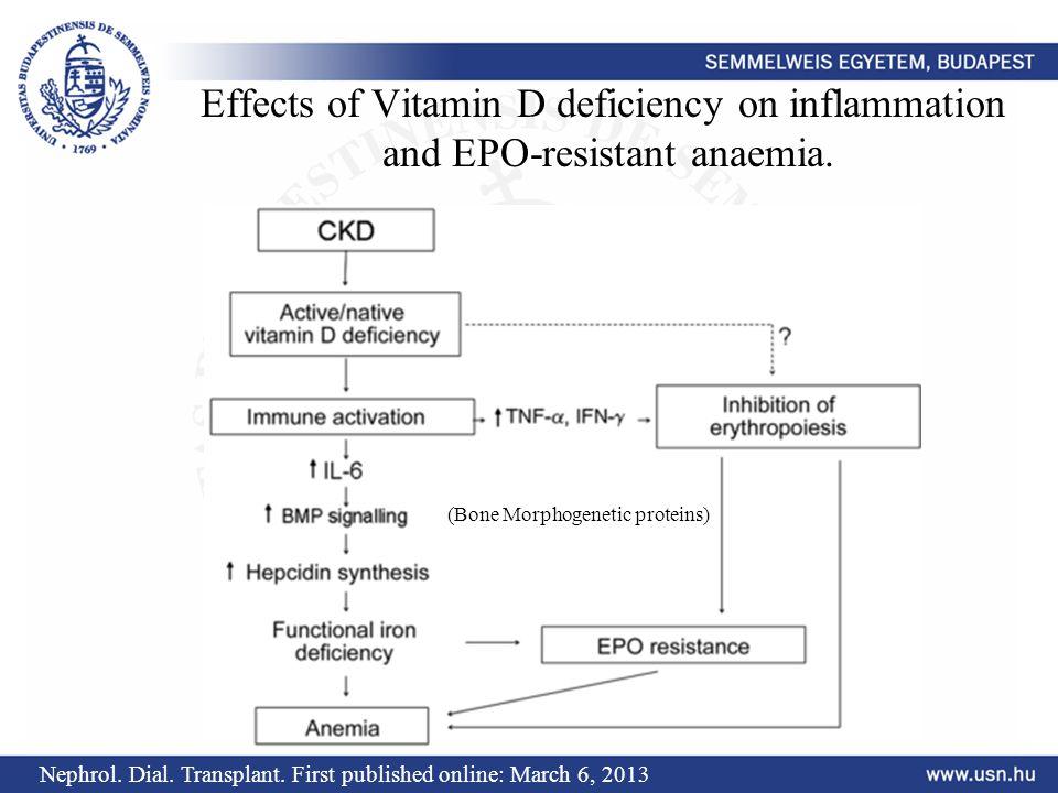 D vitamin kezelés hatása az EPO szükségletre Vitamin D Treatment Period JNEPHROL 2011; 24(01): 98-105 1./ Induló érték, 2./ 4 x 50000 IU/ hét, 3./ 3 x 50000 IU / hó, 3.
