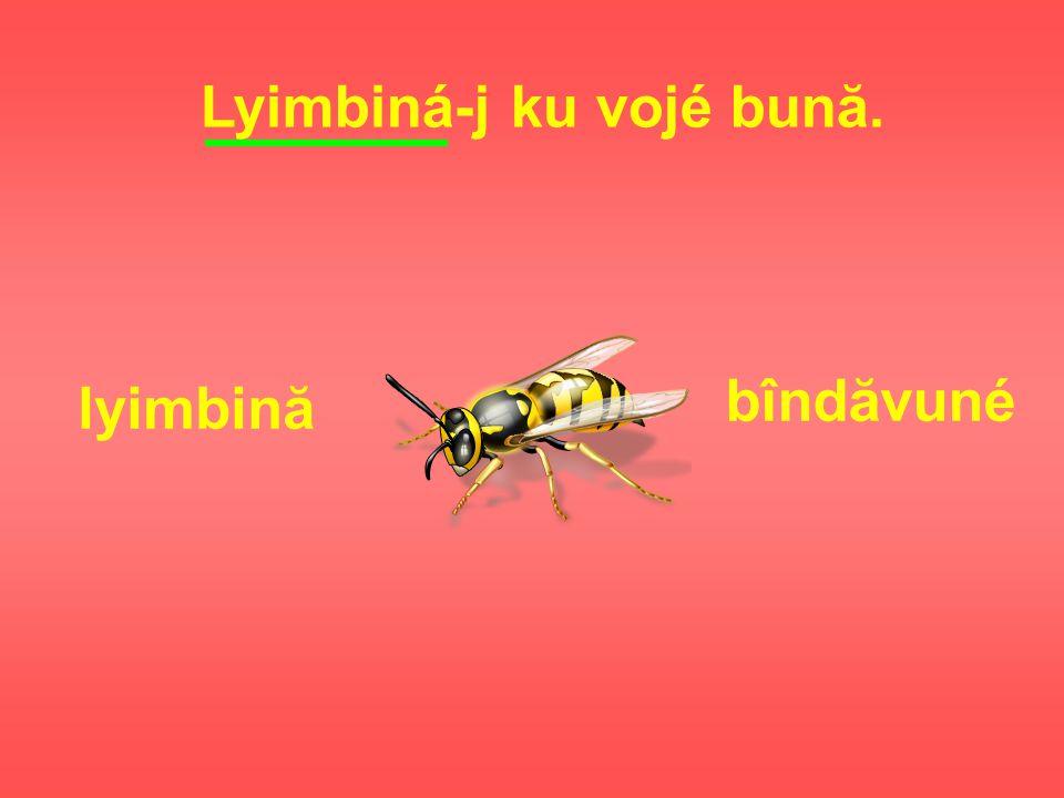 Lyimbiná-j ku vojé bună. lyimbină bîndăvuné