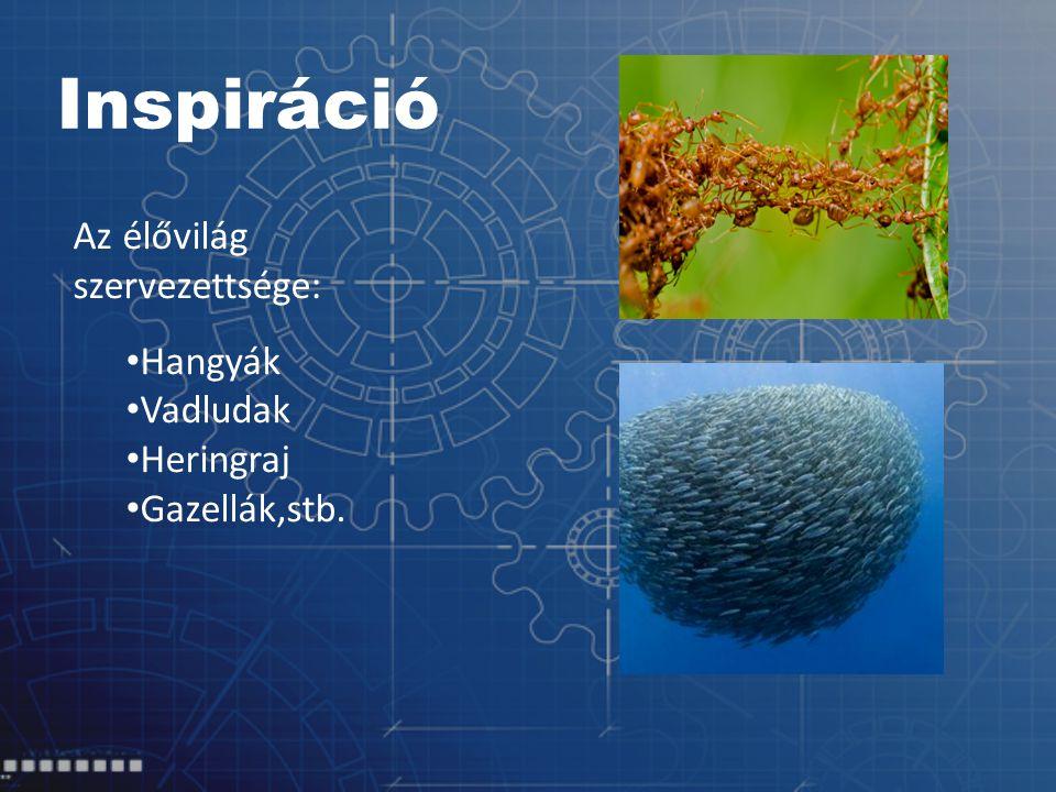 Inspiráció Az élővilág szervezettsége: Hangyák Vadludak Heringraj Gazellák,stb.