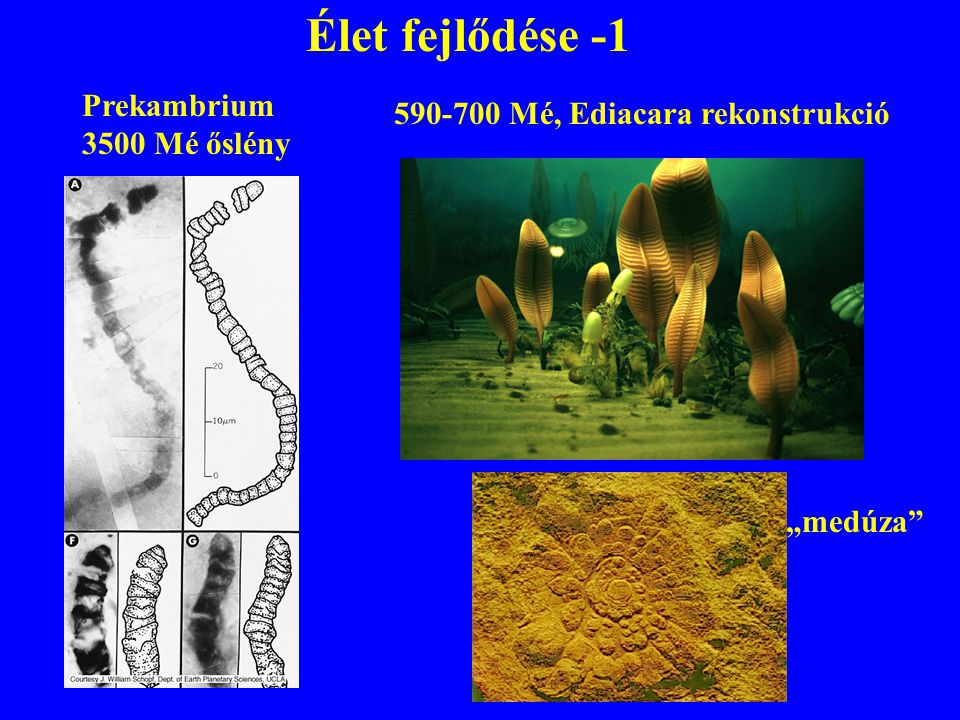 """Élet fejlődése -1 590-700 Mé, Ediacara rekonstrukció Prekambrium 3500 Mé őslény """"medúza"""""""