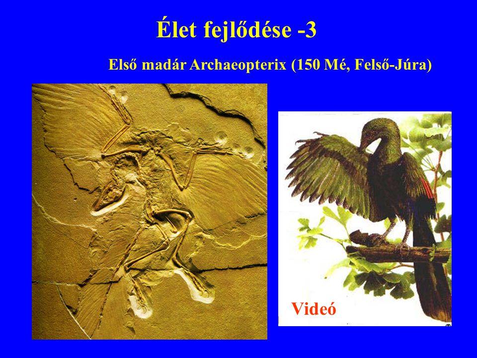 Élet fejlődése -3 Első madár Archaeopterix (150 Mé, Felső-Júra) Videó