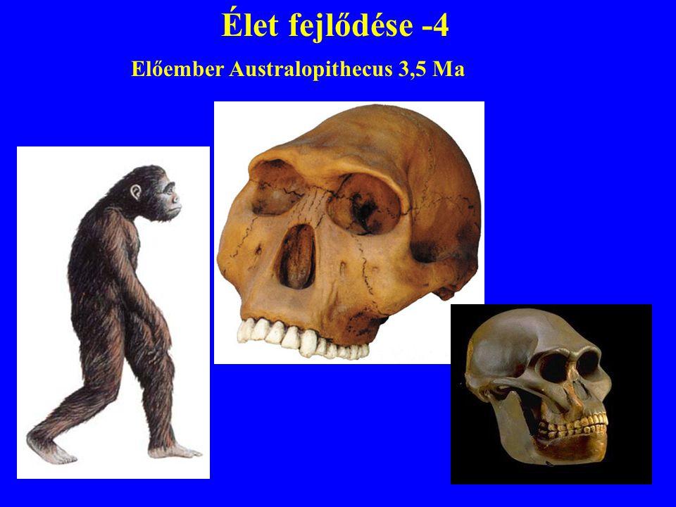 Élet fejlődése -4 Előember Australopithecus 3,5 Ma