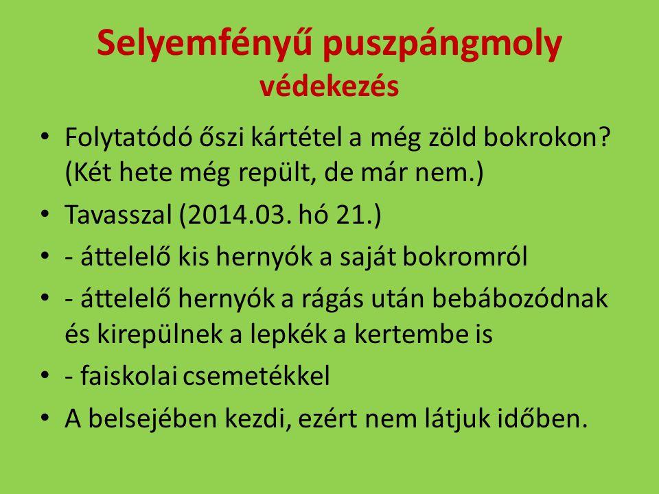 Selyemfényű puszpángmoly védekezés Folytatódó őszi kártétel a még zöld bokrokon? (Két hete még repült, de már nem.) Tavasszal (2014.03. hó 21.) - átte