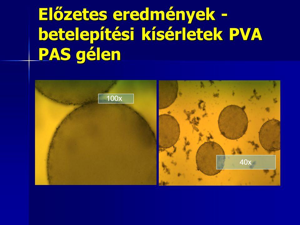 Előzetes eredmények - betelepítési kísérletek PVA PAS gélen 40x 100x