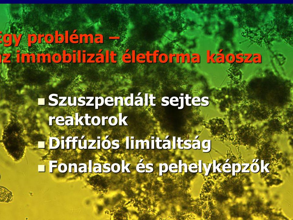 Egy probléma – az immobilizált életforma káosza Szuszpendált sejtes reaktorok Szuszpendált sejtes reaktorok Diffúziós limitáltság Diffúziós limitáltsá