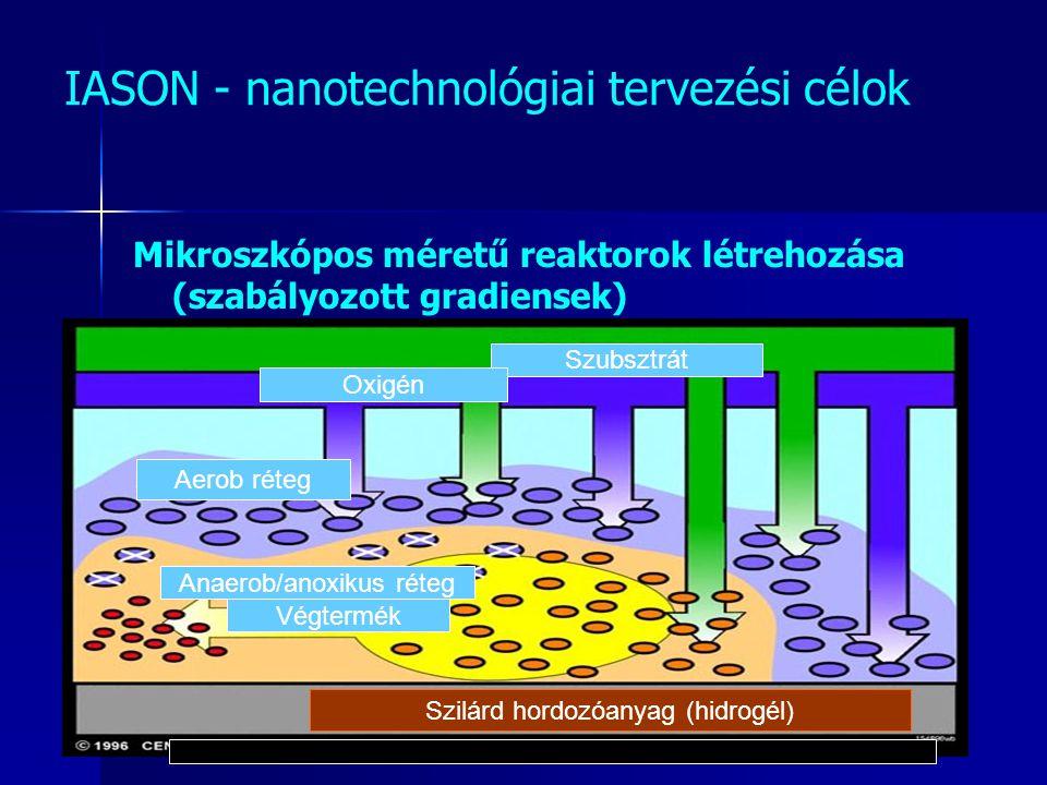 IASON - nanotechnológiai tervezési célok Mikroszkópos méretű reaktorok létrehozása (szabályozott gradiensek) Szilárd hordozóanyag (hidrogél) Szubsztrá