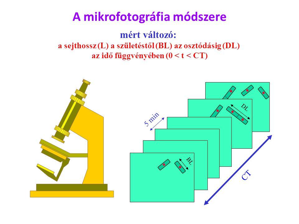 DL BL CT 5 min A mikrofotográfia módszere mért változó: a sejthossz (L) a születéstől (BL) az osztódásig (DL) az idő függvényében (0 < t < CT)