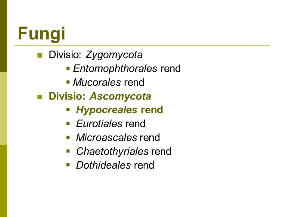 Fungi Divisio: Zygomycota  Entomophthorales rend  Mucorales rend Divisio: Ascomycota  Hypocreales rend  Eurotiales rend  Microascales rend  Chaetothyriales rend  Dothideales rend