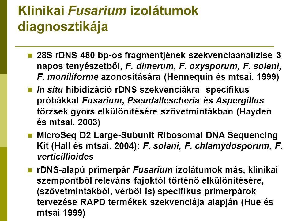 Klinikai Fusarium izolátumok diagnosztikája 28S rDNS 480 bp-os fragmentjének szekvenciaanalízise 3 napos tenyészetből, F.