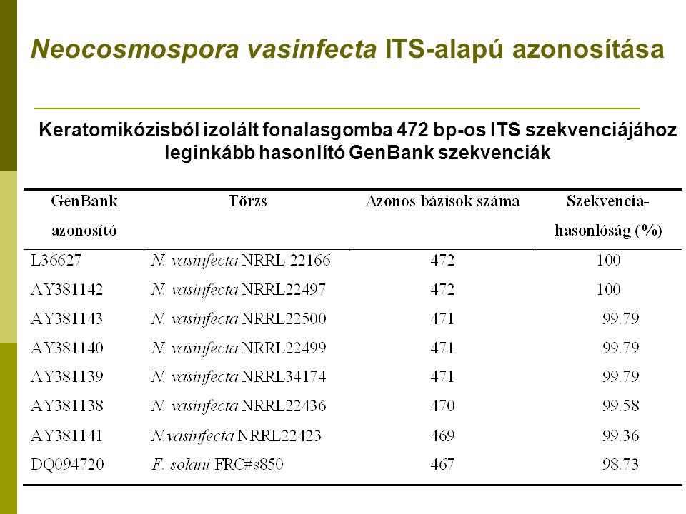 Keratomikózisból izolált fonalasgomba 472 bp-os ITS szekvenciájához leginkább hasonlító GenBank szekvenciák Neocosmospora vasinfecta ITS-alapú azonosítása
