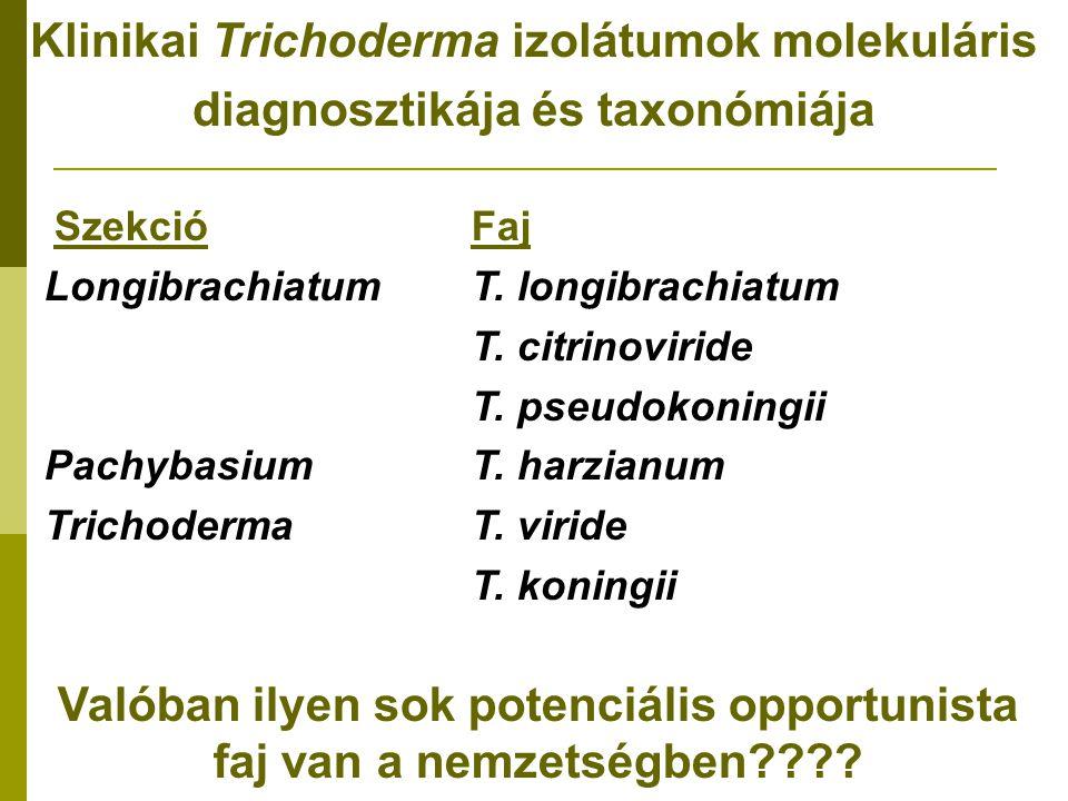 Klinikai Trichoderma izolátumok molekuláris diagnosztikája és taxonómiája SzekcióFaj LongibrachiatumT.