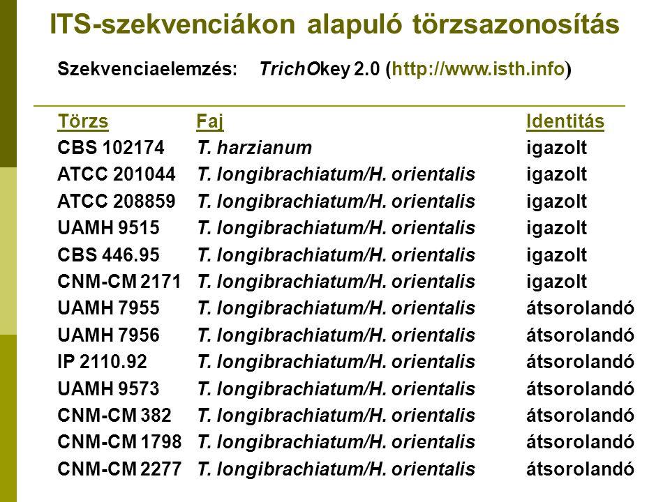 ITS-szekvenciákon alapuló törzsazonosítás Szekvenciaelemzés:TrichOkey 2.0 (http://www.isth.info ) Törzs FajIdentitás CBS 102174 T.