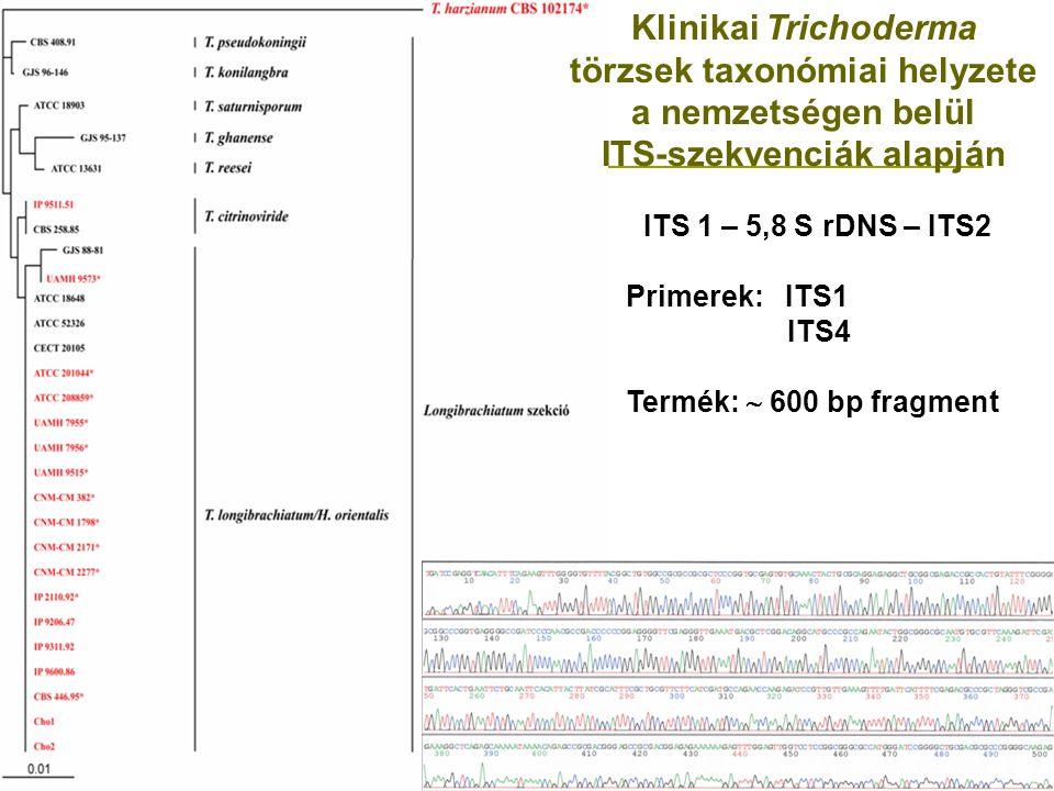Klinikai Trichoderma törzsek taxonómiai helyzete a nemzetségen belül ITS-szekvenciák alapján ITS 1 – 5,8 S rDNS – ITS2 Primerek: ITS1 ITS4 Termék:  600 bp fragment