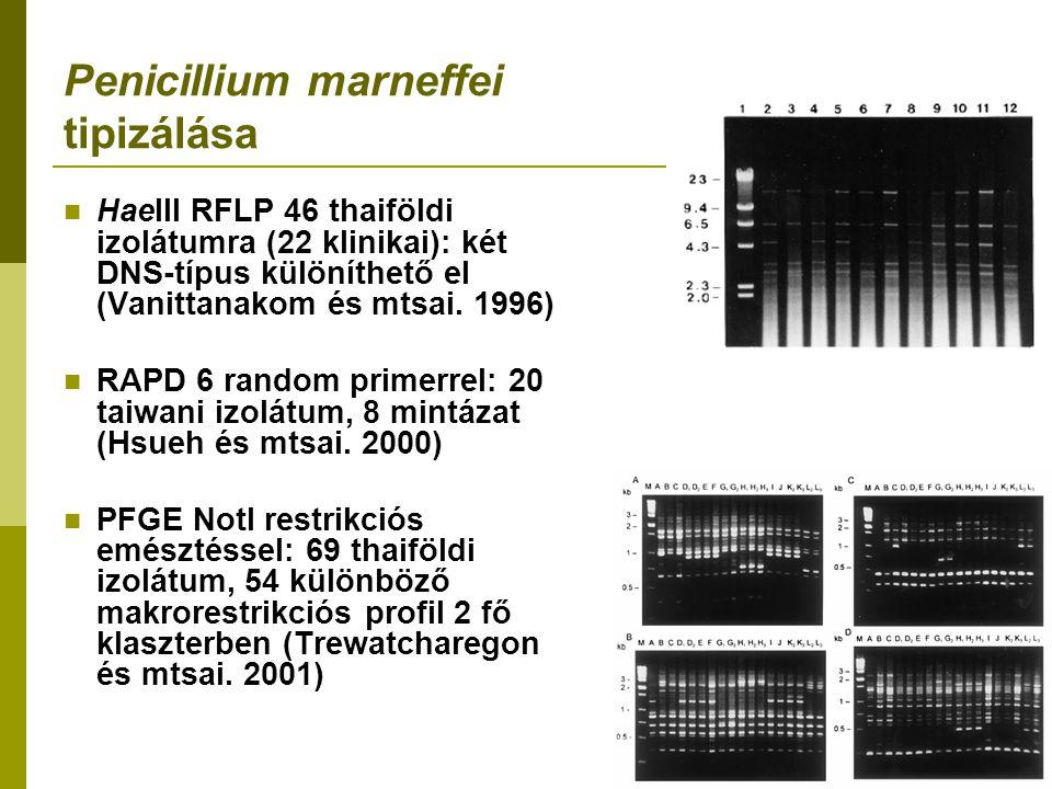 Penicillium marneffei tipizálása HaeIII RFLP 46 thaiföldi izolátumra (22 klinikai): két DNS-típus különíthető el (Vanittanakom és mtsai.