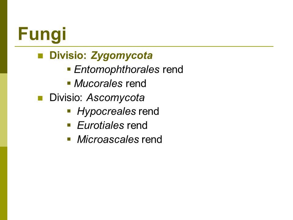 Fungi Divisio: Zygomycota  Entomophthorales rend  Mucorales rend Divisio: Ascomycota  Hypocreales rend  Eurotiales rend  Microascales rend