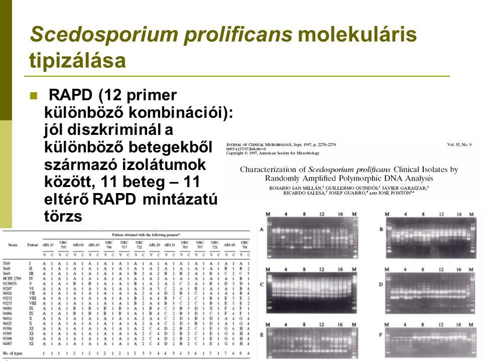 Scedosporium prolificans molekuláris tipizálása RAPD (12 primer különböző kombinációi): jól diszkriminál a különböző betegekből származó izolátumok között, 11 beteg – 11 eltérő RAPD mintázatú törzs