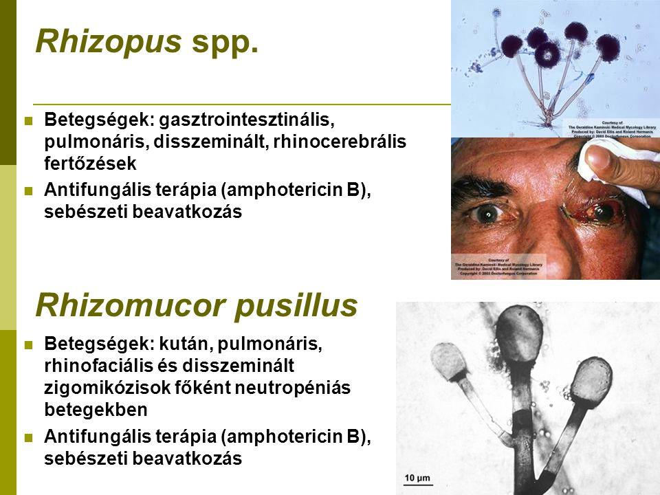 Rhizopus spp.