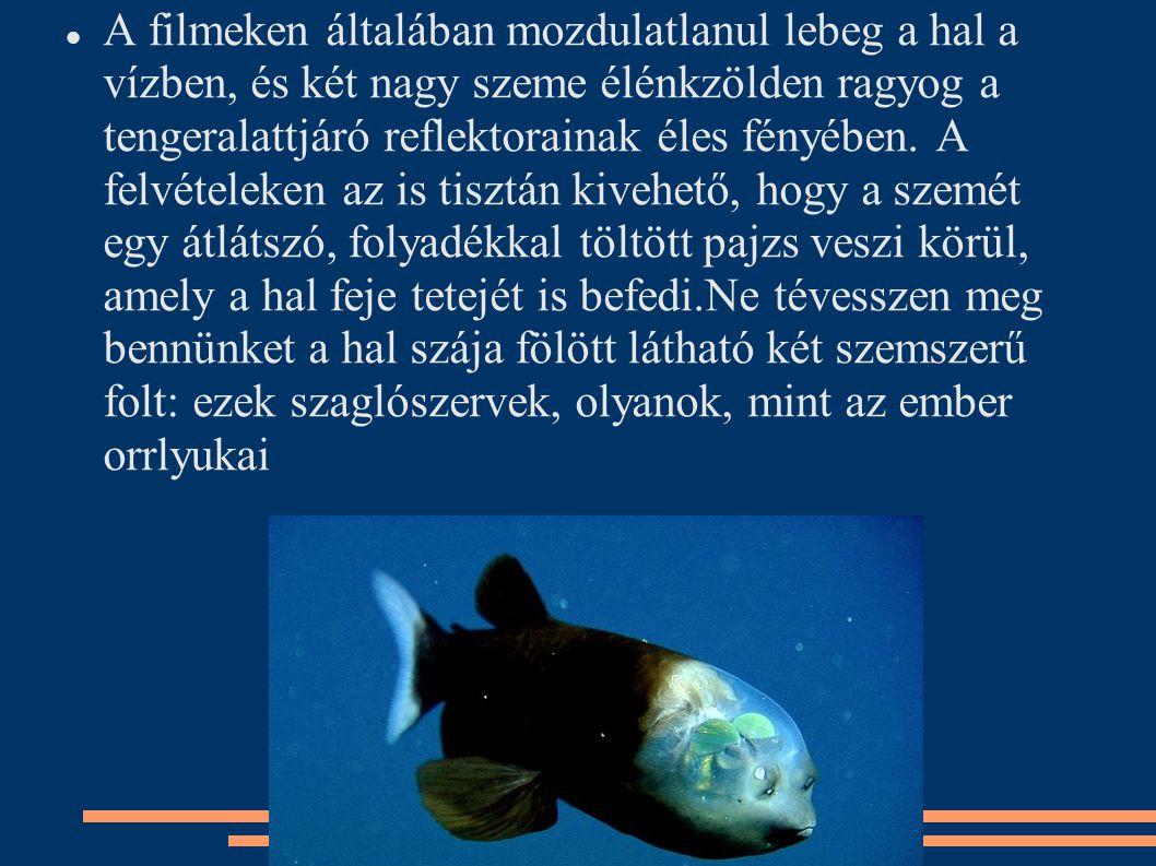 A filmeken általában mozdulatlanul lebeg a hal a vízben, és két nagy szeme élénkzölden ragyog a tengeralattjáró reflektorainak éles fényében. A felvét