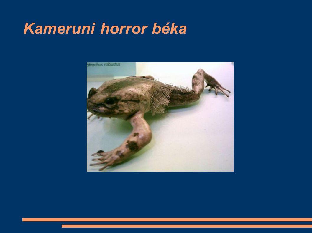 Kameruni horror béka