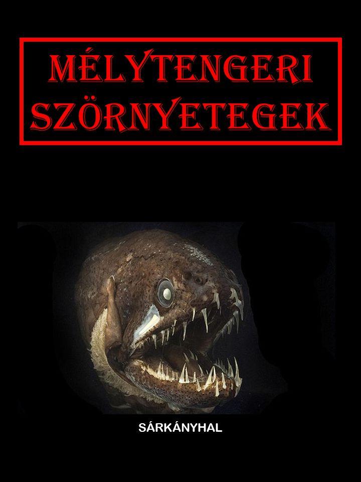 Mélytengeri szörnyetegek SÁRKÁNYHAL