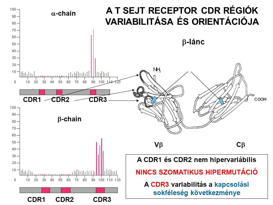 A T SEJT ANTIGÉN RECEPTOR ÉS AZ MHC – PEPTID KOMPLEX KÖLCSÖNHATÁSA 1.A TCR monovalens, csak egy MHC – peptid komplexet köt 2.Milyen a TCR – peptid – MHC kölcsönhatás erőssége.