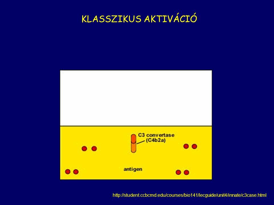 http://student.ccbcmd.edu/courses/bio141/lecguide/unit4/innate/c3case.html KLASSZIKUS AKTIVÁCIÓ