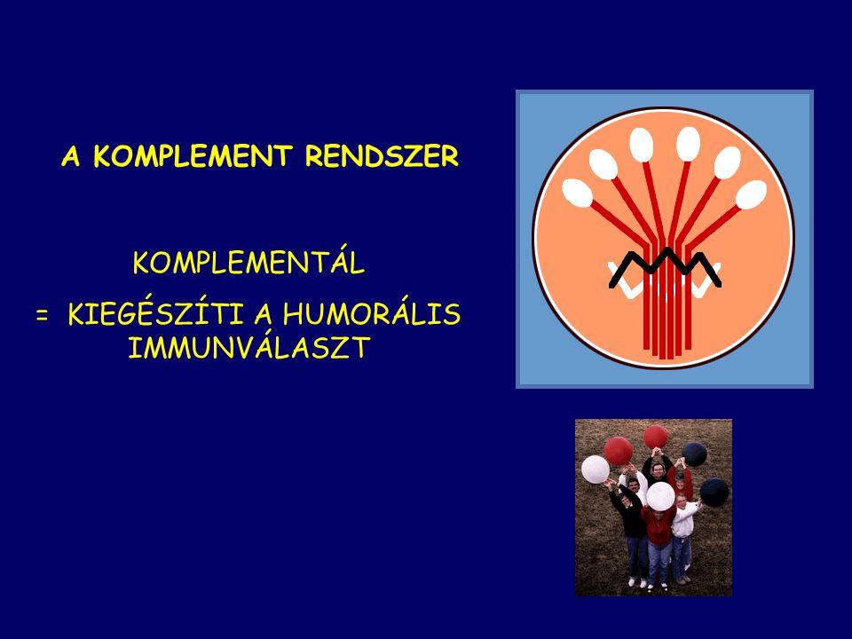 KOMPLEMENT RENDSZER IMMUNOLÓGIA INFORMATIKUS HALLGATÓKNAK 2009.