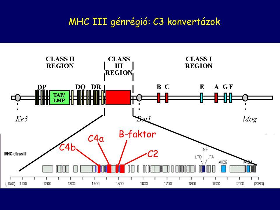 KlasszikusLektin Alternatív Baktérium felszín Amplifikációs hurok KORAI ESEMÉNYEK
