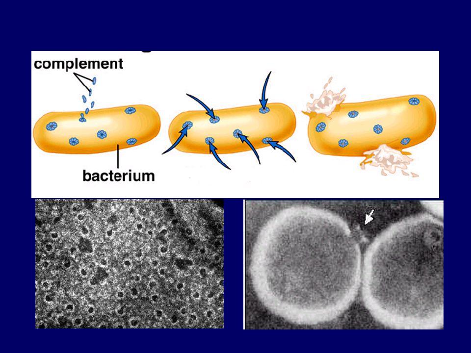 lízis MAC patogén