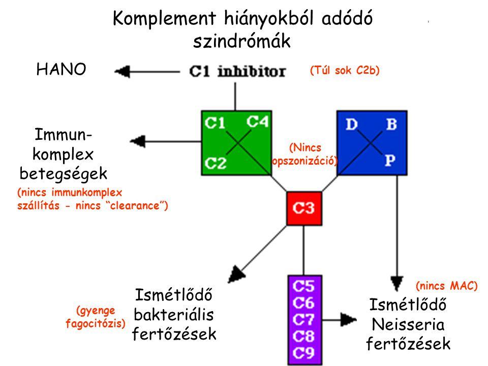 A komplementrendszer hatásai Patogének lízise Opszonizáció Gyulladásos reakció aktiválása Immun komplexek eltávolítása + B-sejt kostimuláció