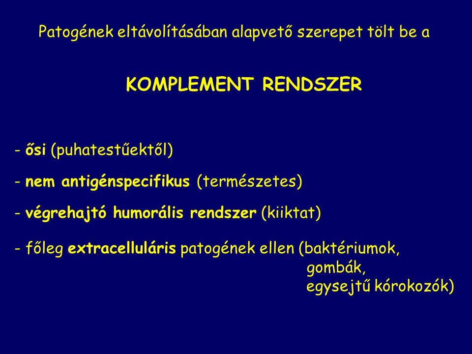 Antigén + antitest = Immunkomplex Antitest függő effektor mechanizmusok semlegesítésopszonizálás komplement aktiválás semlegesítés Lízis makrofág