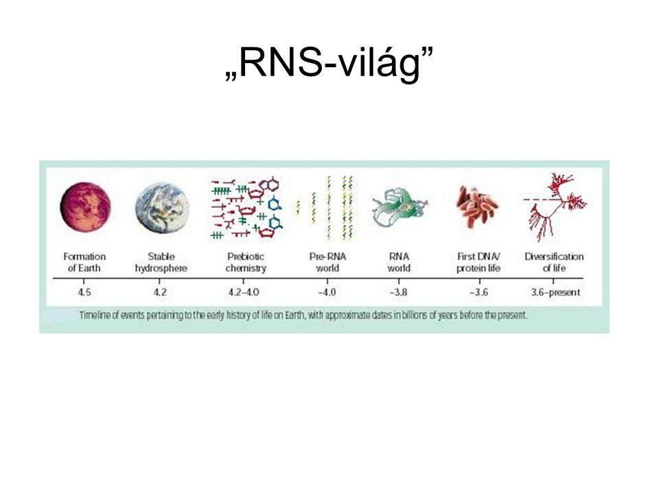 """""""RNS-világ"""""""