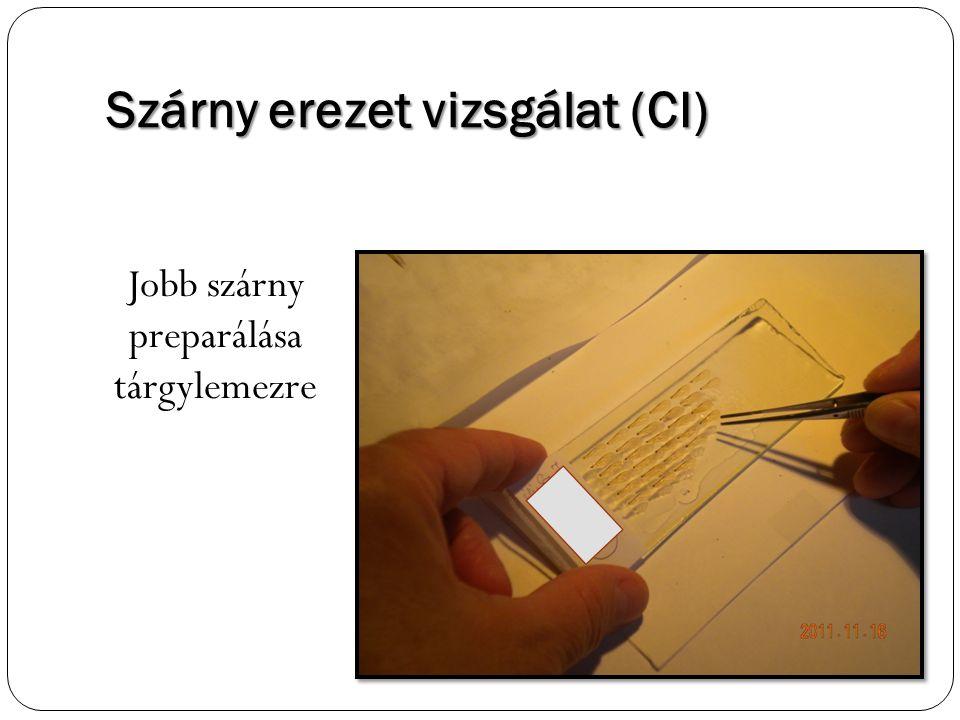 Szárny erezet vizsgálat (CI) Jobb szárny preparálása tárgylemezre