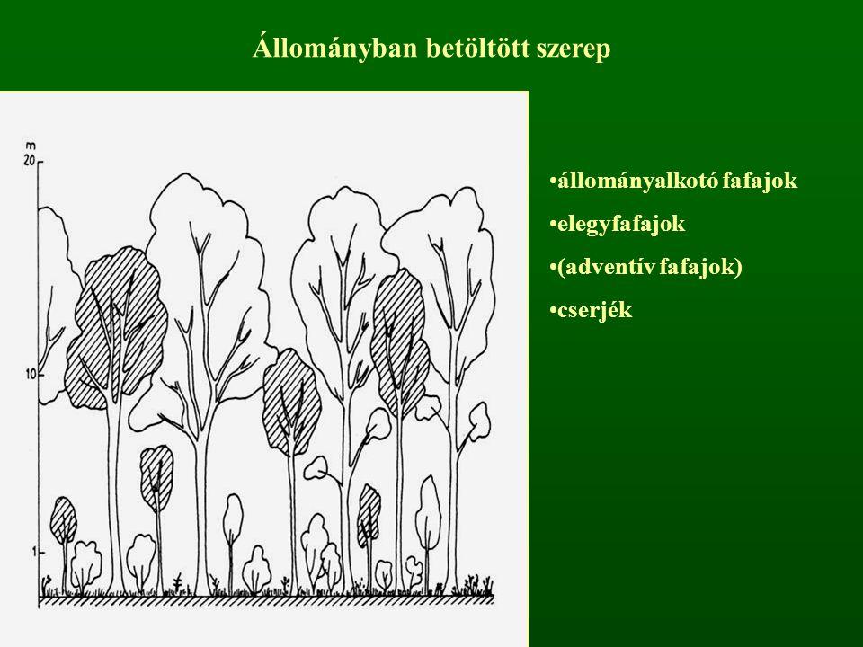 Állományban betöltött szerep állományalkotó fafajok elegyfafajok (adventív fafajok) cserjék