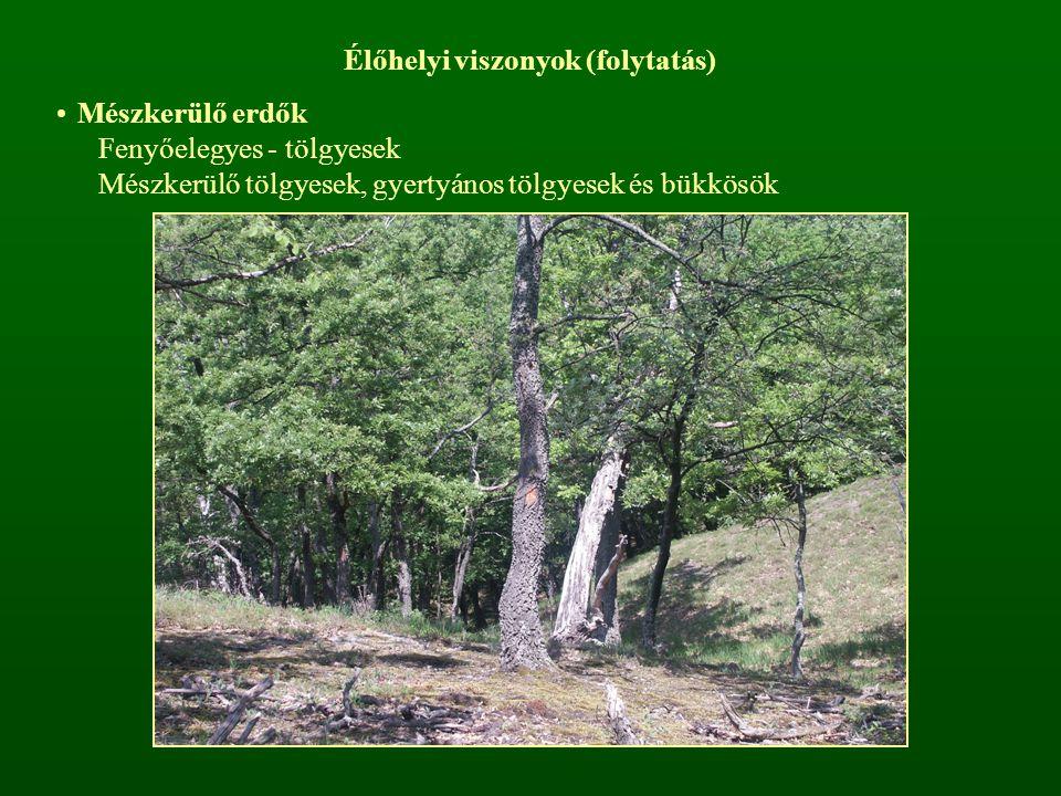Élőhelyi viszonyok (folytatás) Mészkerülő erdők Fenyőelegyes - tölgyesek Mészkerülő tölgyesek, gyertyános tölgyesek és bükkösök