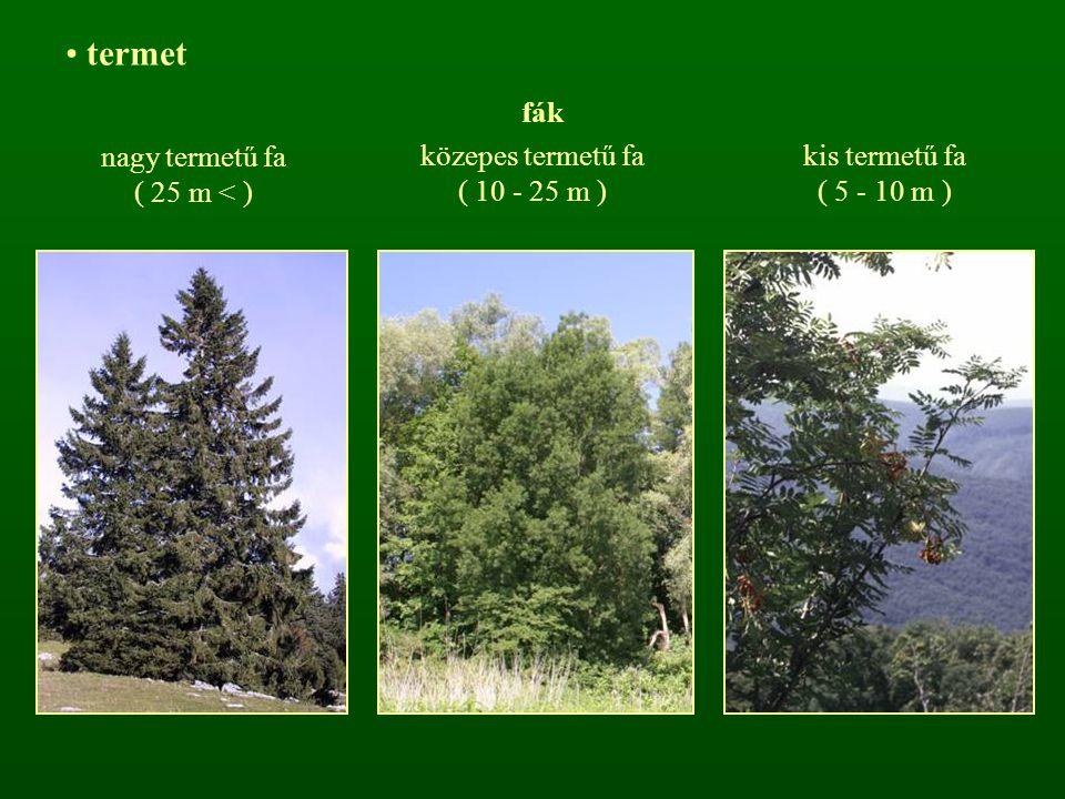termet fák közepes termetű fa ( 10 - 25 m ) nagy termetű fa ( 25 m < ) kis termetű fa ( 5 - 10 m )