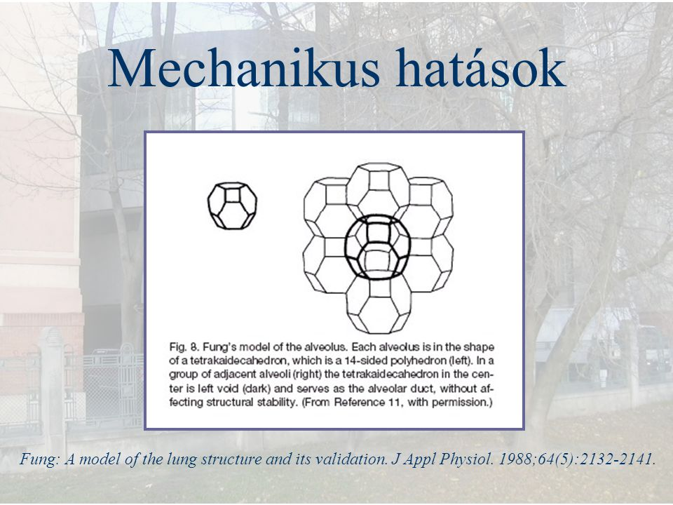 Mechanikus hatások Fung: A model of the lung structure and its validation. J Appl Physiol. 1988;64(5):2132-2141.