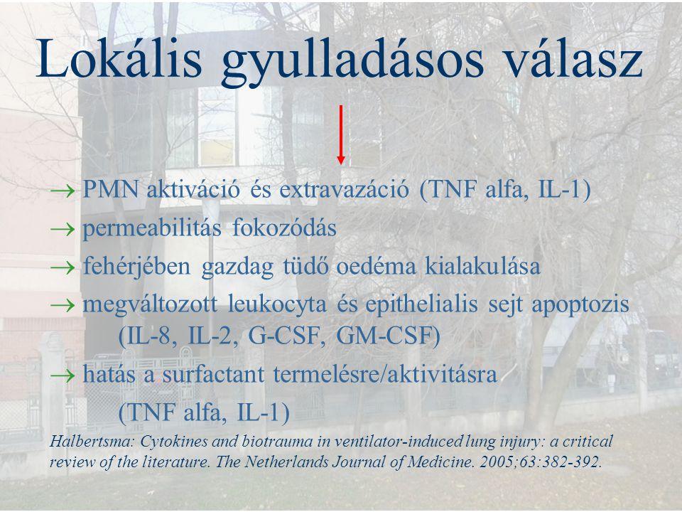 Lokális gyulladásos válasz  PMN aktiváció és extravazáció (TNF alfa, IL-1)  permeabilitás fokozódás  fehérjében gazdag tüdő oedéma kialakulása  me