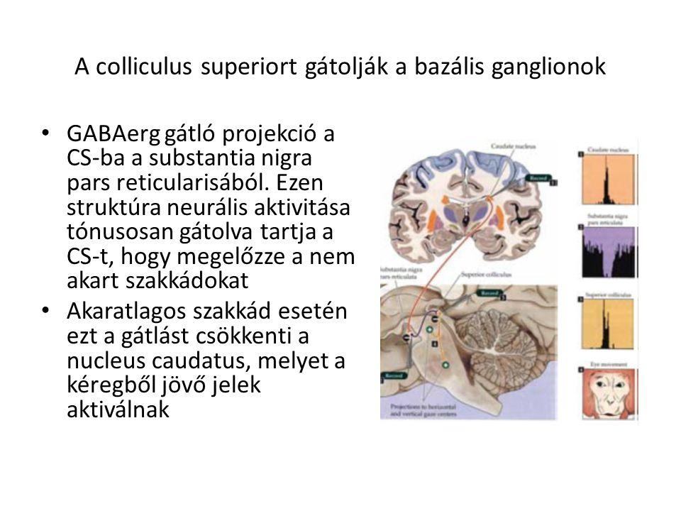 A colliculus superiort gátolják a bazális ganglionok GABAerg gátló projekció a CS-ba a substantia nigra pars reticularisából. Ezen struktúra neurális
